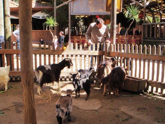 Quarto, Italie : Una fattoria con animali, per la gioia dei bambini.