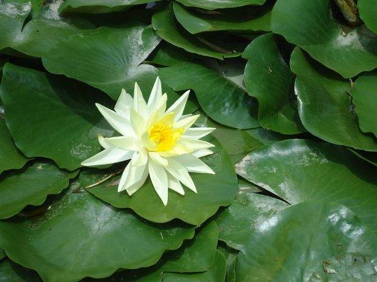 Hacienda La Magdalena Boutique Hotel : Flor en uno de los estanques