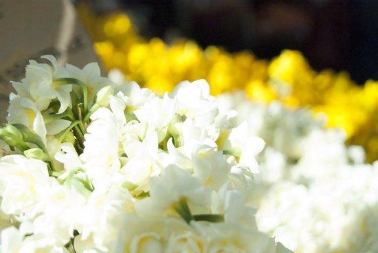 Paddington Markets : Fresh Flowers