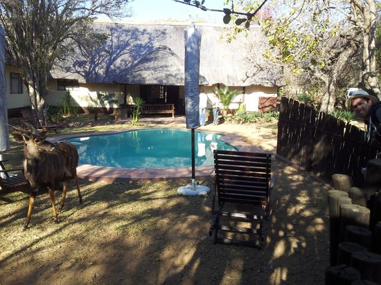 Marc's Treehouse Lodge: A deer(?) and one of my travelmates enjoying the pool!