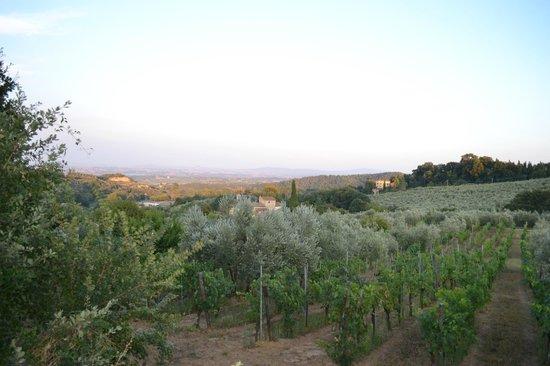 Fattoria San Martino: view