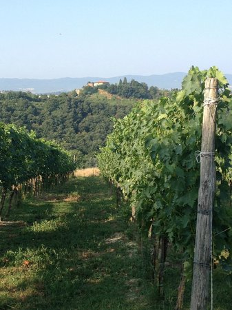 Agriturismo Fattoria Armena: The Vineyard