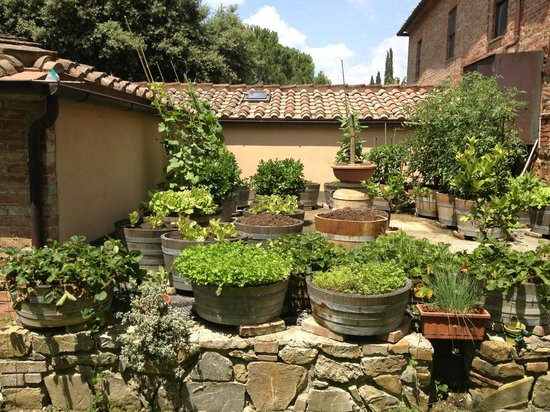 Agriturismo Fattoria Armena: THE way to Container Garden!