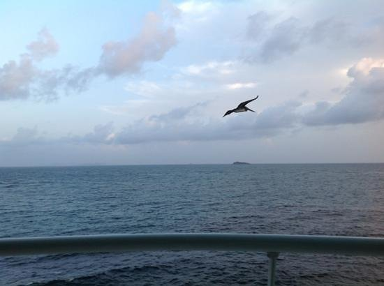 Oyster Bay Beach Resort: getting buzzed by the Brown Pelicans while sitting on our deck