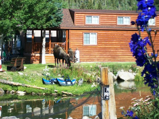 Western Riviera Lakeside Lodging & Events: Moose
