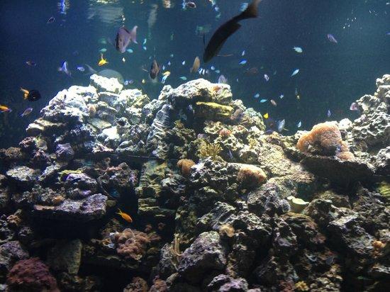 Virginia Beach Aquarium Coupons 2017 2018 Best Cars
