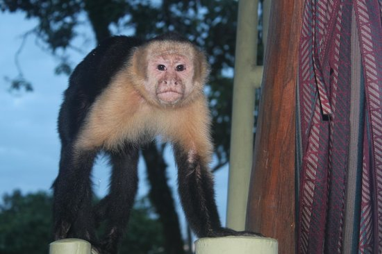 Issimo Suites Boutique Hotel and Spa: One of the monkeys who visits each morning