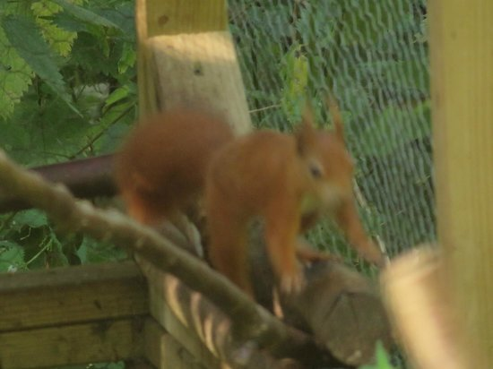 Natural Surroundings: The red squirrel wouldn't keep still.  Her name is Bev.