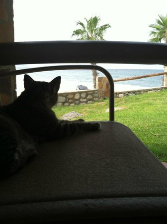 "Rancho Leonero Resort: A few cats ""Gato"" to keep you company :)"