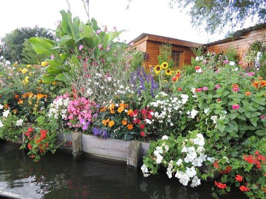 A garden on the water obr zek za zen les hortillonnages d 39 amiens amiens tripadvisor - Les hortillonnages d amiens ...