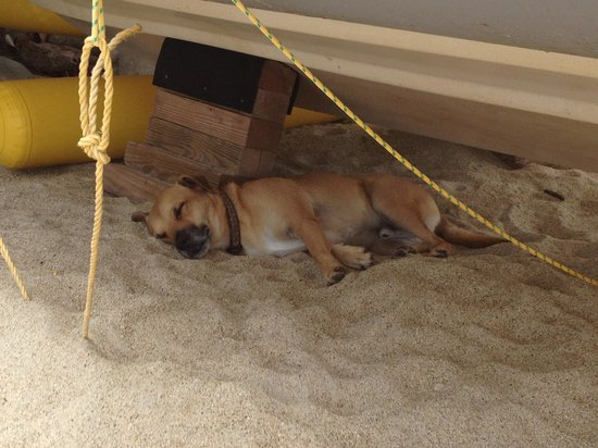 Cooper Island Beach Club: The life of an island dog