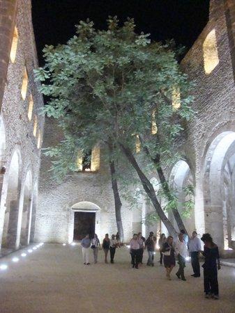 Chiesa di Santa Maria dello Spasimo: lo Spasimo ed il suo ailanthus