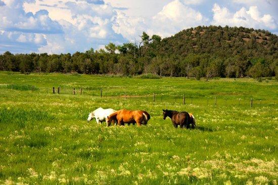 Sky Ute Casino & Resort: HORSES NEAR SKY UTE CASINO