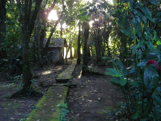 La Baula Lodge: Trail at the lodge