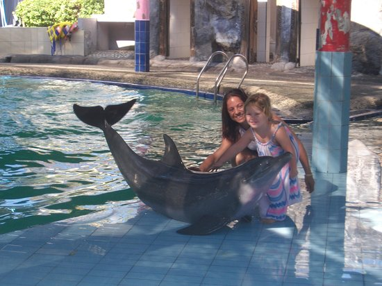 Melka Excelsior Dolphin & Wildlife Resort: To touch the Dolphins the best experience