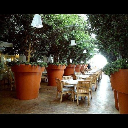 Mondrian Hotel Restaurant Los Angeles