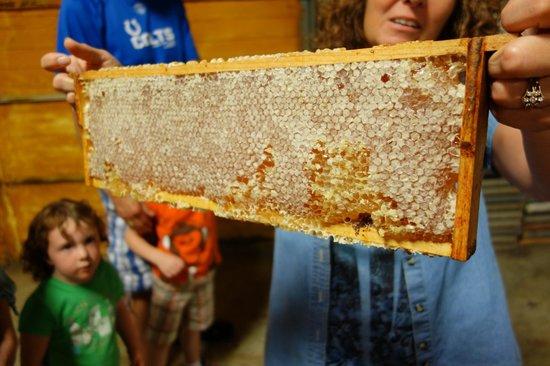 Hunters Honey Farm: One full honeycomb