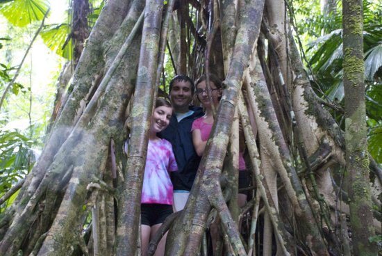 Heritage & Interpretive Tours: Standing inside shell of Parasite Tree roots