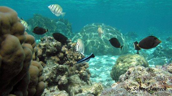 Aroa Marine Reserve: local scenery