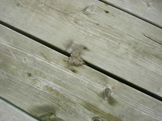 Calabogie Peaks Hotel: Bird poop on deck.