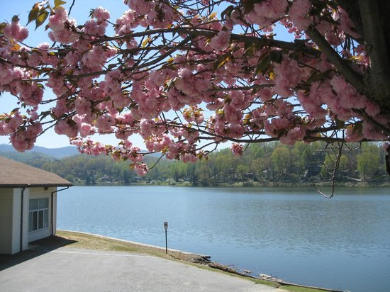 ‪‪Lake Junaluska Conference and Retreat Center‬: Spring blossoms at Lake Junaluska‬