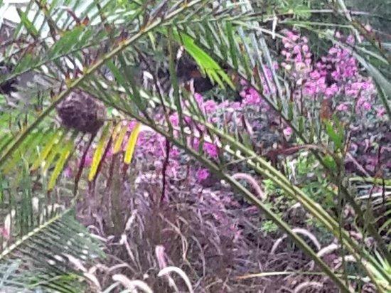 Kaskazi Beach Hotel : Bird's nest next to the lobby