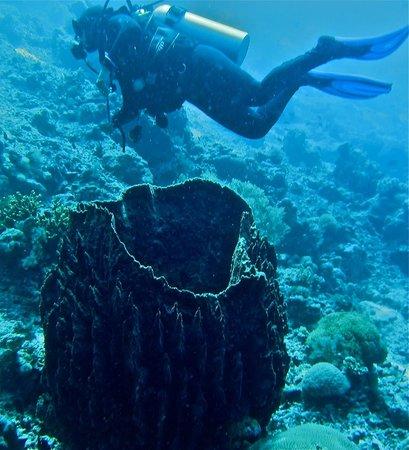 Wakatobi Dive Resort: diving