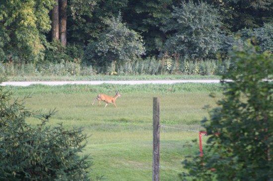 Whalan, MN: We saw wildlife every day