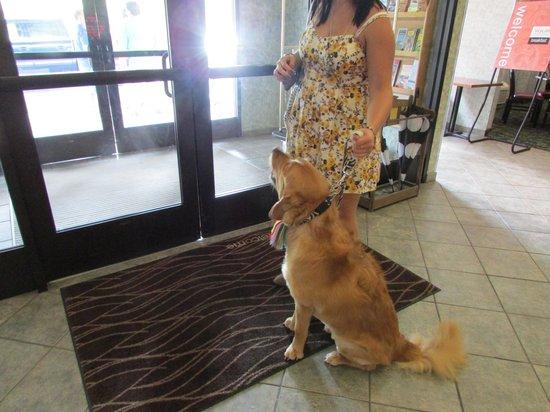 Comfort Inn Huntingdon: Daisy checking into hotel