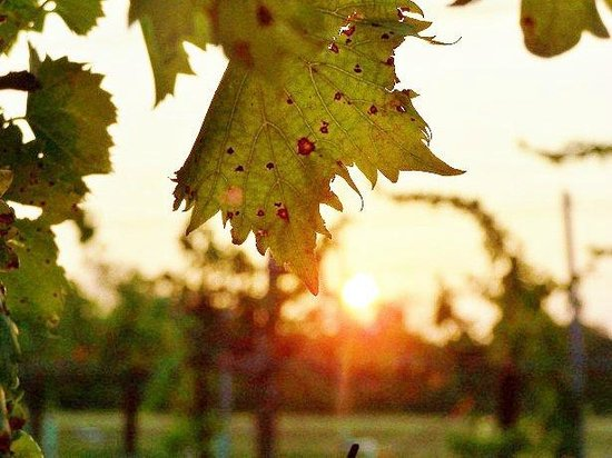 Wakefield Country Inn & Vineyards : Sunrise