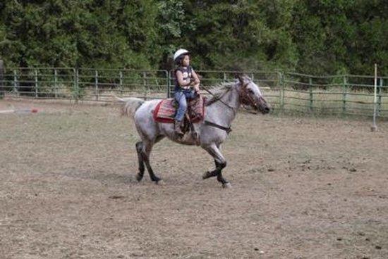 Coffee Creek Ranch: Horseback riding