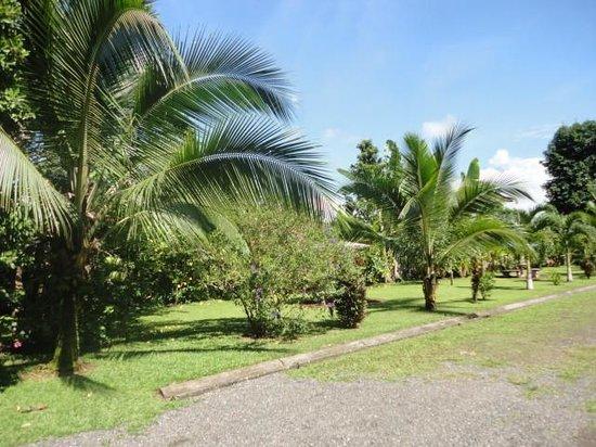 Hotel Lavas del Arenal : vistazo a la naturaleza y árboles frutales