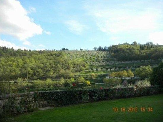 Castello di Verrazzano: Grapes