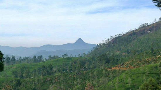 Governor's Mansion: Adams Peak View