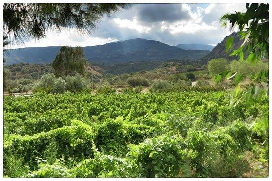 Agriturismo Su Barraccu: Vigna di Su Barraccu