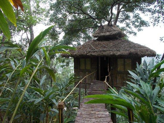 Vanya Treehouse : The Vanya experience