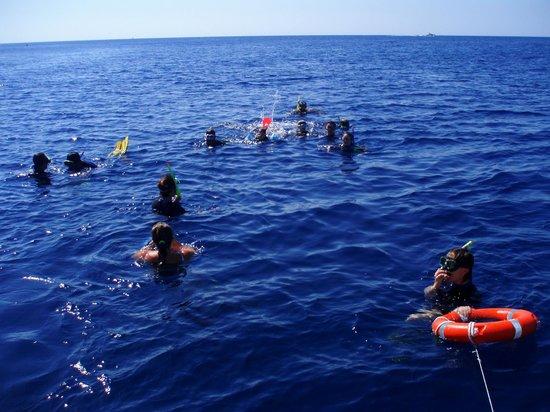Parco Marino del Plemmirio: Snorkeling Plemmirio.