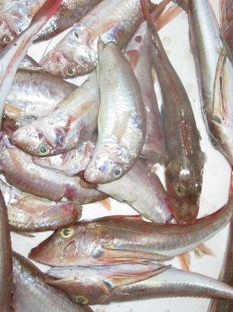Hotel Il Grillo: Pesce