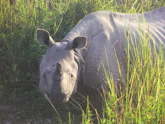 IORA - The Retreat,Kaziranga: Indian rhino