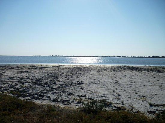 Ranch de la Brouzetière : Les plages du marais