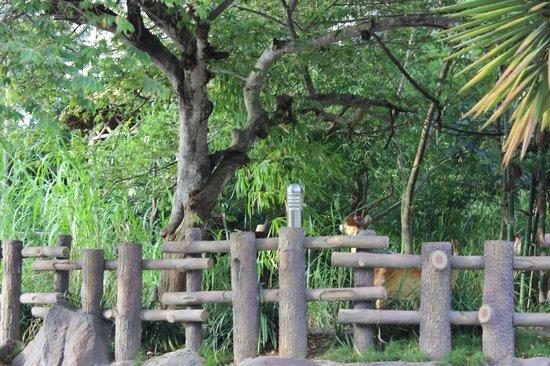 Confident Cascade: Garden