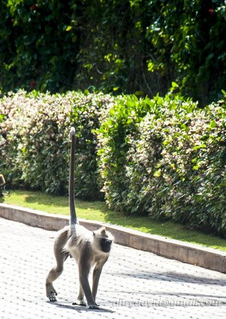 The Windflower Resort & Spa, Mysore: Prowling the hotel grounds