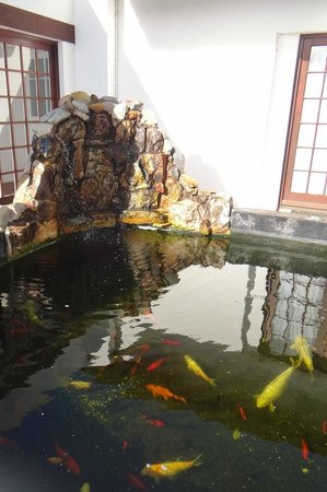 Whale Rock Luxury Lodge : the pond next to the breakfast room