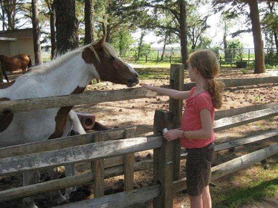 Refuge Inn: Petting Ponies in the Pony Pen
