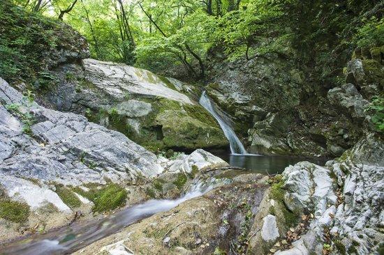 La Crisalide: Have a walk on the wild side