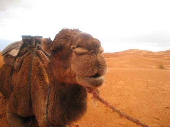 Explore Sahara Tours : Un ami
