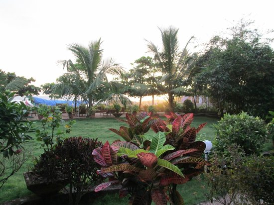 Palm Tree Heritage: Lush green garden