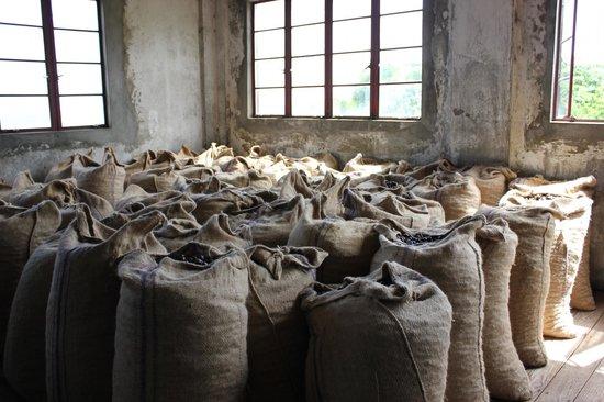 Spice Island Beach Resort: Nutmeg processing station