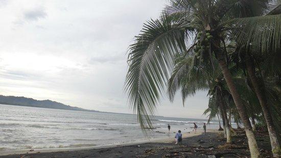 Hotel Banana Azul : beach