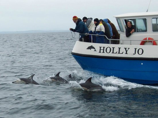 Cork Whale Watch